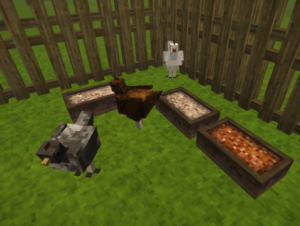 Chicken-with-trough.png